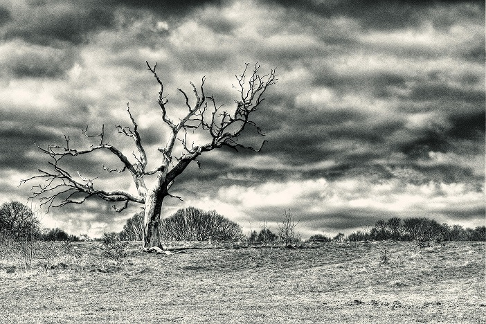 lone_tree_on_heath